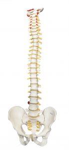 Wat is chiropractici